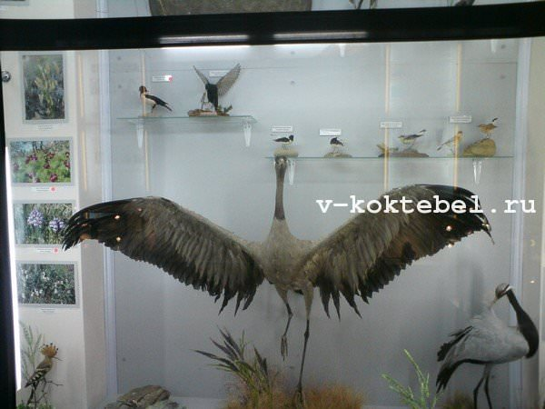 Коктебель-Карадаг-музей