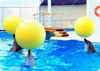 дельфинарий-в-поселке