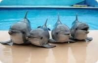 Кара-Дагский-дельфинарий, биостанция-Кара-Даг