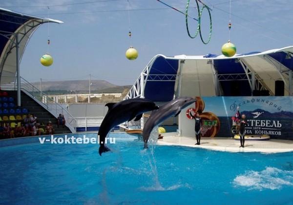 дельфинарий-Коктебель-шоу-дельфинов