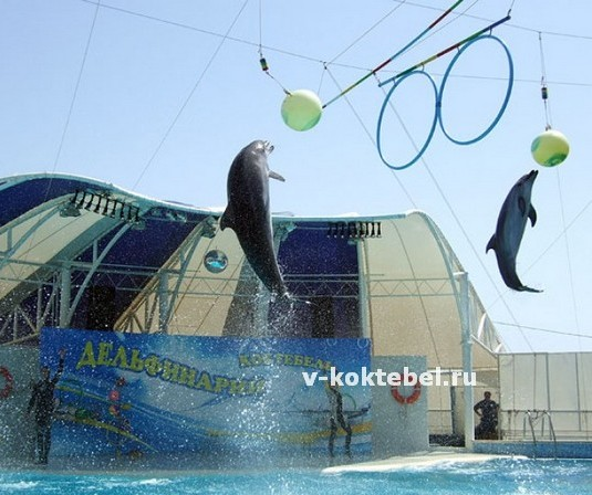 фото-Коктебельский-дельфинарий
