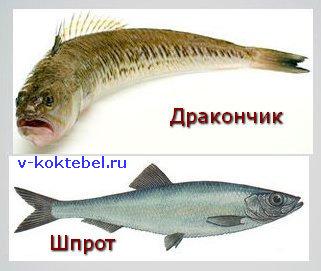рыбы Черного моря - дракончик и шпрот