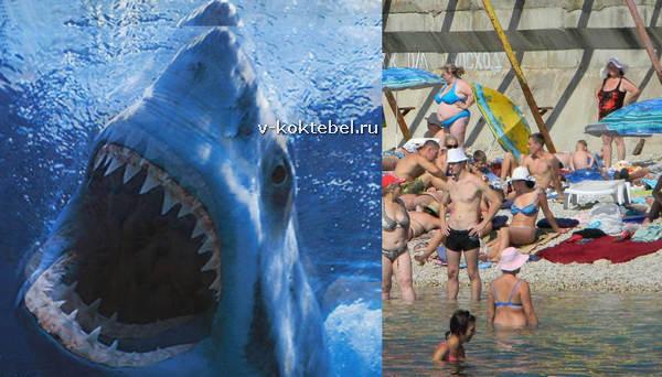 фото акул в Чёрном море